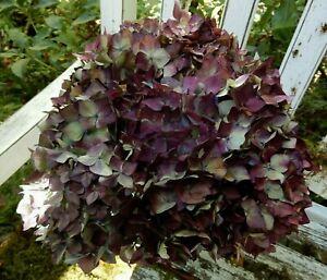 8 Dried Hydrangea Flowers Blue, Green + Dark Purple Wedding DIY Craft Farmhouse