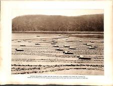 Tortues sur la plage de l'Île Lacrosse au Nord de l'Australie  ILLUSTRATION 1926