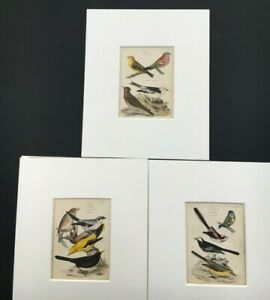 Vintage Job Lot 3 Bird pictures 1840s hand - coloured newly mounted 8 x 10 RARE