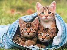 """Good Jeans Run in the Family!"" AVANTI BIRTHDAY CARD Kittens"