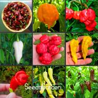 100 PCS Seeds 16 Kinds To Choose Hot Chilli Pepper Capsicum Vegetable Bonsai NEW