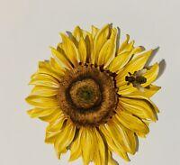 3 x  Large Sunflower and Bee Decoupage Card Topper Die Cuts, scrapbook ephemera