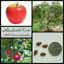 5+ PINK LADY APPLE TREE SEEDS (Malus 'Pink Lady') Tasty Fruit Ornamental