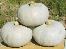 2 pcs vegetable Featured white pumpkin seeds