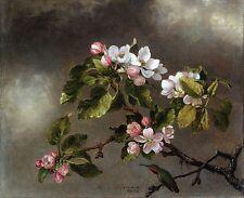 """Martin J Heade, Humming Bird, Apple Blossoms, Antique home decor 20""""x16"""" Art"""