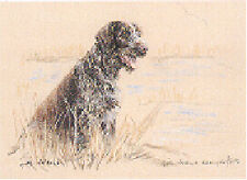 German Wire Haired Pointer Limited Edition Art Print by Uk Artist Gill Evans*
