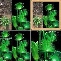 100 Pcs Rare Emerald Fluorescent Flower Seeds Garden Night Light Emitting Plants