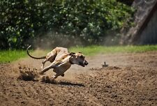 + Win Easy Cash With The TOP-DOG-FINDER International Greyhound Betting System +