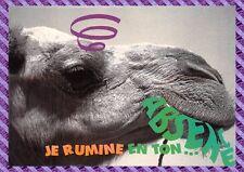 Carte Postale - Dromadaire