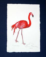 Flamingo: Ken Richards watercolor