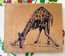 Rare & Huge! Giraffe by Arizona Stamps africa zoo calves savannah mammal Htf