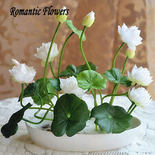 10 pcs White Mini Lotus Hydroponic Small Water Lily Seeds Flower Seed