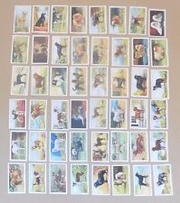 GALLAHER Cigarette Cards (48/48) Dogs 2nd Series 1938