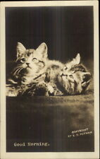 Pair of Kittens Kitty Cats GOOD MORNING c1915 Real Photo Postcard