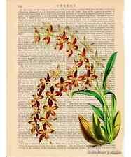 Yellow Purple Odontoglossum Orchid Art Print on Antique Book Page Vintage Illust