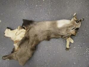 """Soft Dry Tanned Mule Deere Cape Wyoming Taxidermy Aprox 16"""""""