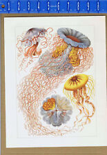 Ernst Haeckel - JELLYFISH - Art Forms of Nature- Color Sea Marine Art Print