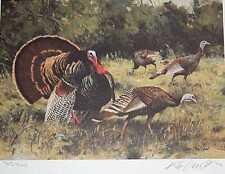 South Texas Rio Grande Turkey in Fulll Display Ken Carlson Sale Low Inventory