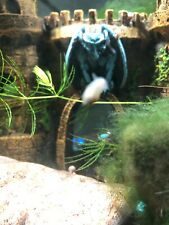 10+ Live Ramshorn Snails, Aquarium and Pond Algae Eaters,Mixed Sizes and Colors.