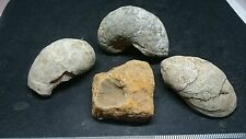 Lovely fossil lot of four L93f