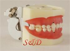 FDA Dental Periodontal Disease Model Resin Teeth Study Teaching Education