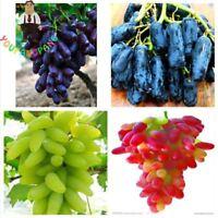 50 Pcs / Bag Rare Finger Grape Seeds Delicious Fruit Seed Bonsai Potted Plants C