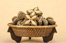10 Sasha Inchi, Plukenetia Volubilis Thai Doa İnca Peanut, Mountain Peanut Seeds