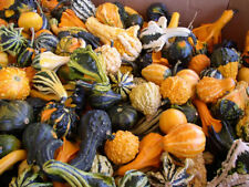 25 Gourd seeds Large Small Mix gourd seeds