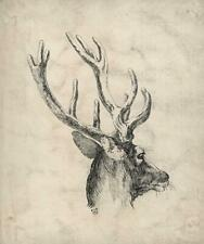 STAG DEER HEAD STUDY Ink Drawing 1862 SIGNED - 19TH CENTURY