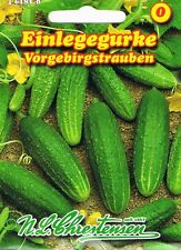 Anzuchterde Samen Top-Gemüse Blaugurke Selbstanbau  obstlecker /& gesund Garten