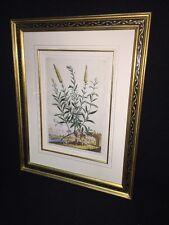 18/19th Century Framed Botanical Engraving