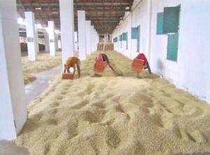 INDIA MONSOONED MALABAR Green/Raw 100% Arabica Coffee Beans For Home Roasting