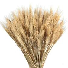 100 Wheat Stems Dried Flowers Garden Plants Colors Real Wheat Wedding Decoration