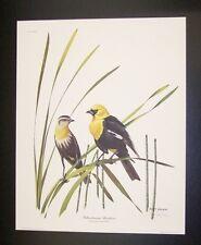 "Ray Harm Hand Signed Print ""Yellow-headed Blackbird"" w/Original Envelope"