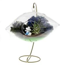"Nw Wholesaler Diy ""Purple Passion"" Complete Terrarium Kit with Live Air Plant"