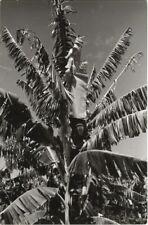 Paul Wolff & Tritschler Vintage Gelatinesilberabzug Kanarische Inseln Palme 40er