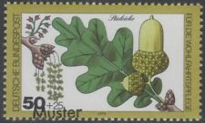Specimen, Germany ScB566 Woodland Plant, Tree, English Oak