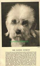 Dandie Dinmont Terrier Dog Head Rare Vintage Art Photo & Breed Description 1931