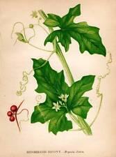 Original 1860 Victorian Flower Fern Grasses Print Botanical Chromolithograph