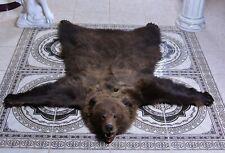 Taxidermy Brown Bear rug Stuffed Bird Handmade
