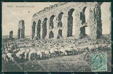 Roma Città Acquedotto di Claudio Pecore Gregge cartolina QT2247