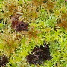 Sphagnum species mix