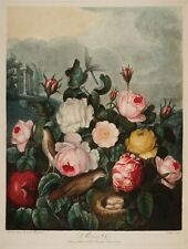 """Temple of Flora : """"Roses"""" (1807) — Giclee Fine Art Print"""