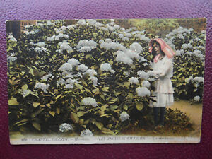 LL No 212 Hortensias CHANNEL ISLANDS Iles Anglo Normandes 1918 Louis Levy