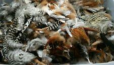 Lot de 100 plumes véritables de coq mixte