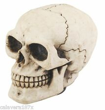 Realistic Hollow Black No Eye Human Skull Shift Knob No Skin Dead Gear Lever New