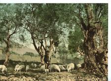Menton. Berger sous les oliviers.  PZ vintage photochromie photochromie, vinta