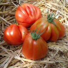 15 Graines/Seeds Tomate Rouge Coeur de Boeuf Ancienne - Variété : Liguria - BIO