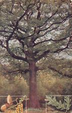 R180070 The Oak. Quercus Robur
