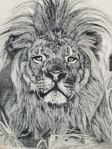 Judith Brown Lion in Waiting Large Signed Framed Limited Edition Line Art Print